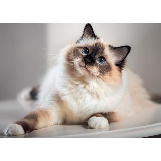 Muster Katzenfutter