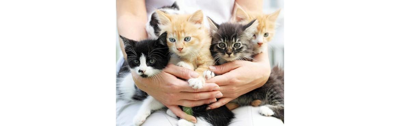 Wahre Liebe Katzenfutter
